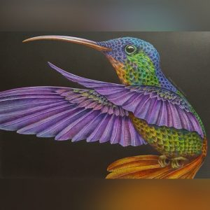 Hummingbird - Intricate Ink Animals in detail by Tim Jeffs, colored by Betty Hung