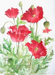 "Watercolor painting by Betty Hung titled ""Poppies"""
