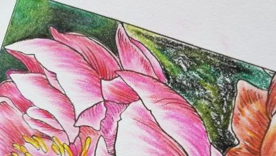 picture to show before and after blending of pastel pencils