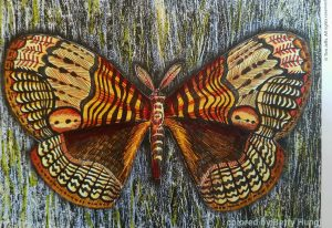 Coloring of Tim Jeff's Gypsy Moth by Betty Hung