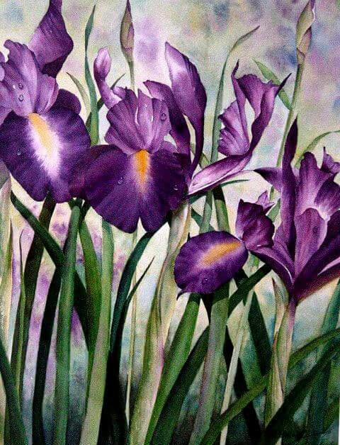 """Irises"" - Watercolor by Betty Hung"