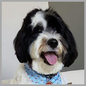 Original photo of Betty Hung's dog Dexter